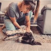 Les bienfaits de la chiropraxie sur vos animaux de compagnie
