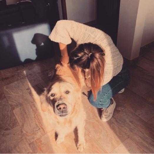 chiropraxie sur un chien ( golden retriever)